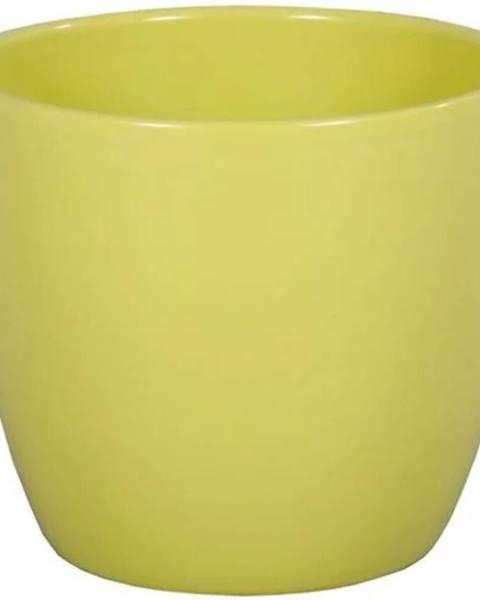 MERKURY MARKET Obal Primus Aromat 13 cm/zelená